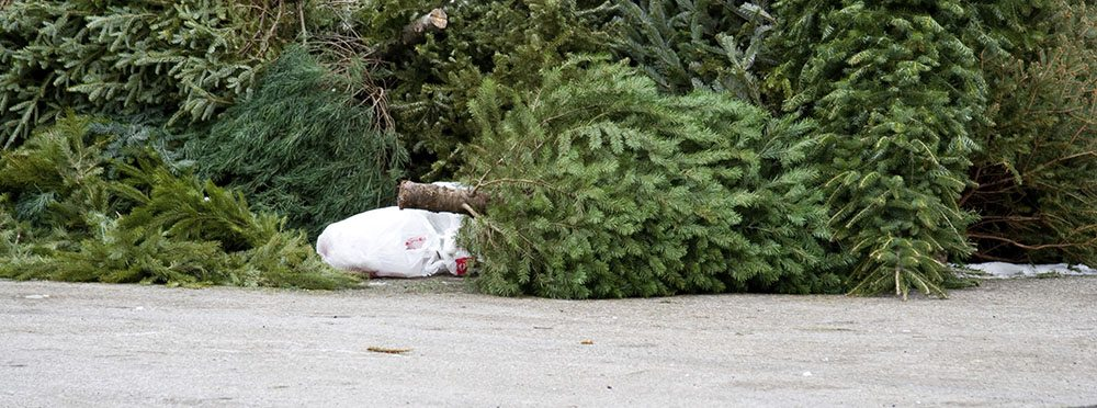 discard christmas tree bloomington indiana_wide